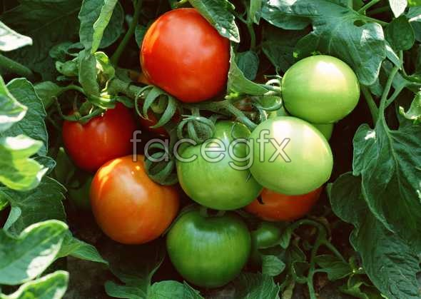 Fresh fruits and vegetables, 465