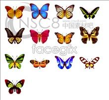 Cute Butterfly map