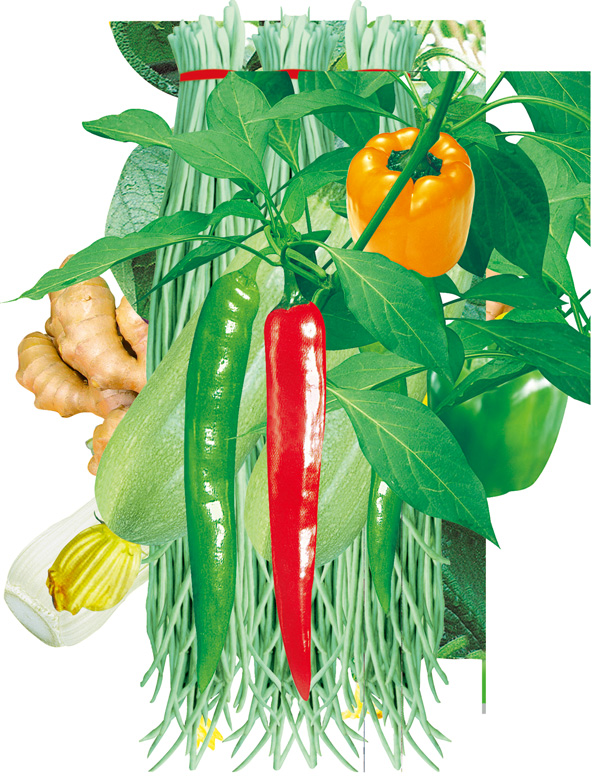 Ginger vegetable chilli pepper source files PSD