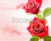 Beautiful rose flower background PSD