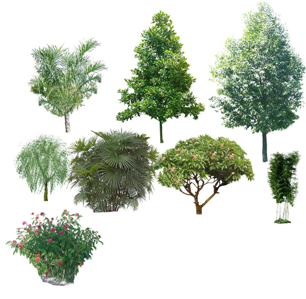 Trees trees HD footage PSD