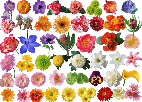 80 species of flowers roses and chrysanthemum PSD