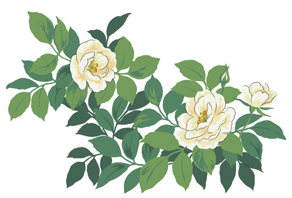 Camellia White hand-painted flowers PSD