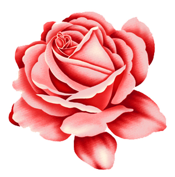 Rose red rose design PSD
