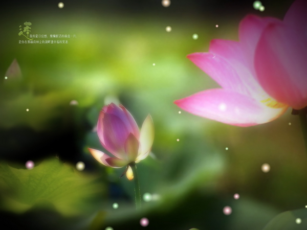 Lotus scent of fragrance design PSD
