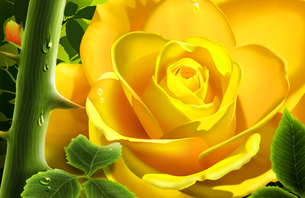 Yellow roses with drops of PSD