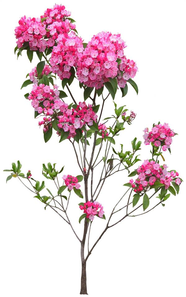 Gardening flowers story peach-cherry blossom design PSD