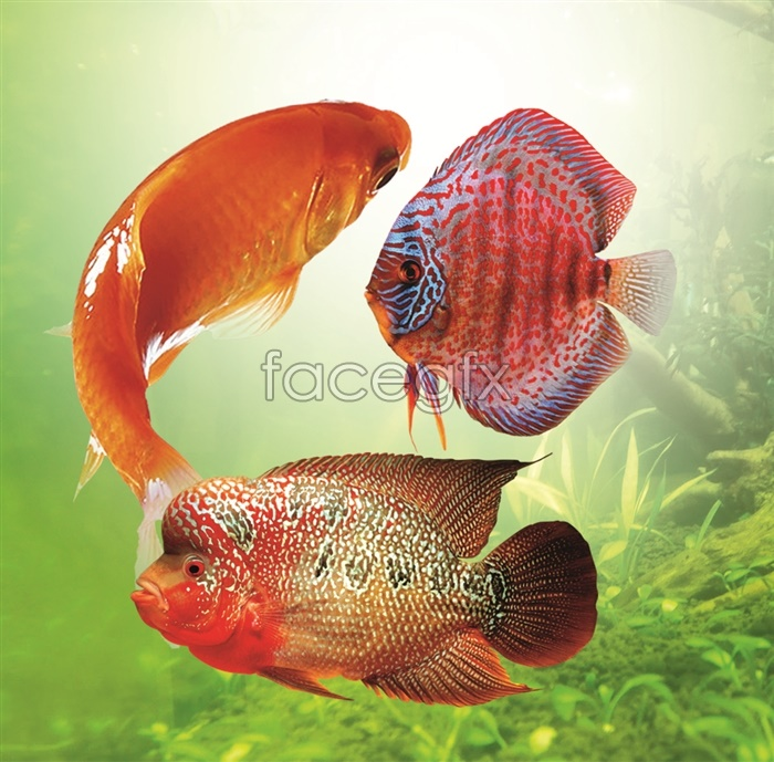 Colorful deep-sea fish PSD picture -2