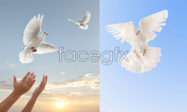 Dove theme graphics PSD
