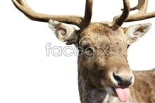 Deer picture  PSD