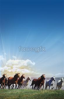 Horse running PSD