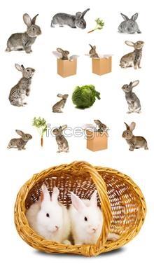 Little bunny PSD
