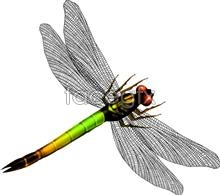 Dragonfly graphic design  PSD