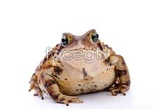 Toad picture  PSD