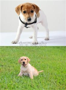 Small dogs HD PSD