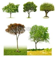 Big tree on a white background picture PSD