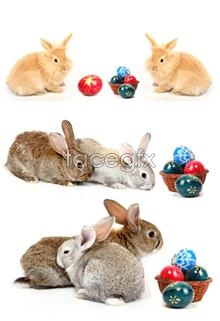 Rabbit HD pictures PSD