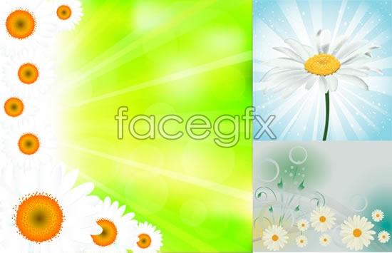 Beautiful chrysanthemum flowers vector