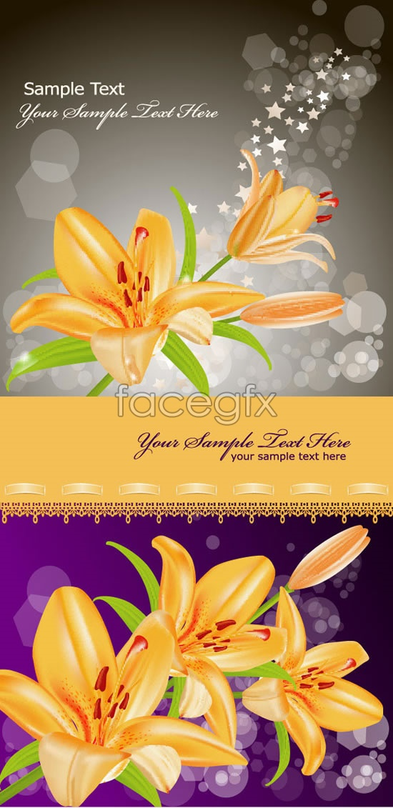 Yellow blooming lilies vector
