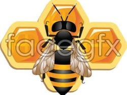 3D bee and honeycomb vector