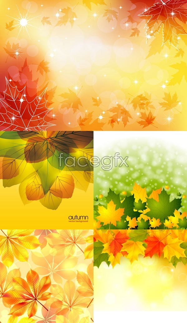 5 colorful autumn background vector