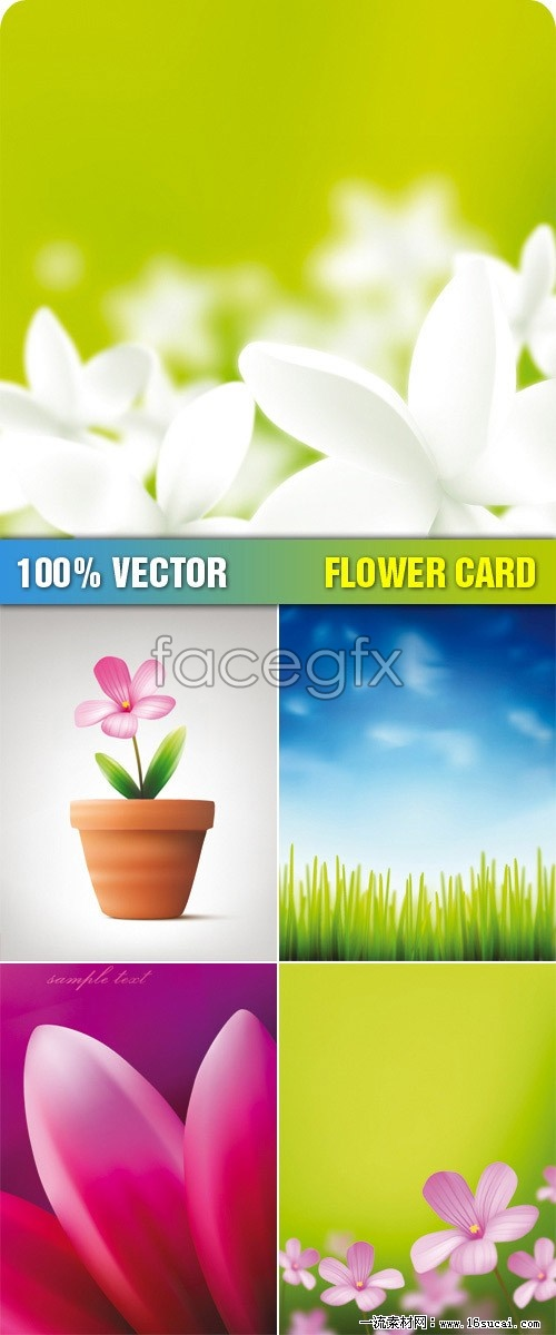 5 realistic flower background vector
