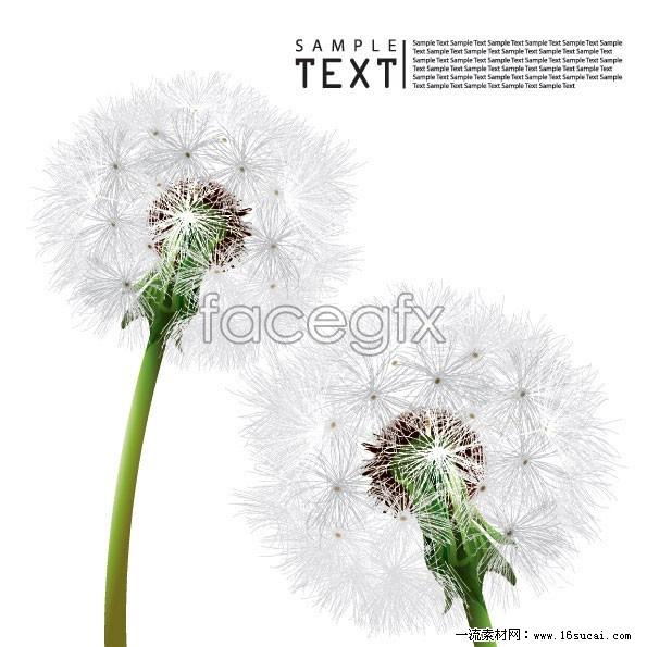 Dandelion vector IV